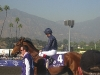Johnny Murtagh aboard Duke Of Marmalade before the 2008 Breeders' Cup Classic. He would finish 9th.