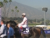 Johnny Velasquez aboard Henrythenavigator before the 2008 Breeders' Cup Classic. He would finish 2nd.