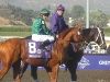 Frankie Dettori aboard Raven's Pass before the 2008 Breeders' Cup Classic. He would go on to win it.