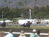Ventura swoops ahead to win the Filly & Mare Sprint at the 2008 Breeders' Cup